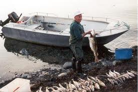 Ещё немного о рыбалке в Трёнделаг, Норвегия