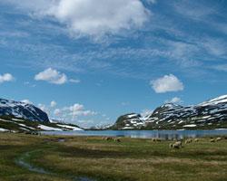 Высокогорное плато Хардангервидда